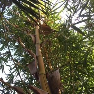 Bamboo Village Uganda bamboe CO2 compensatie